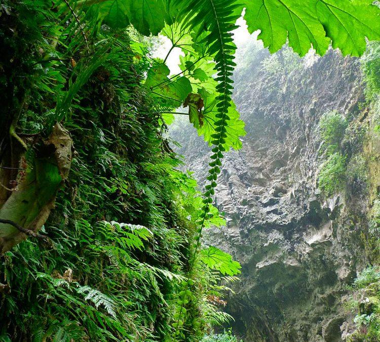Hábitat. Isla Alejandro Selkirk, archipiélago Juan Fernández
