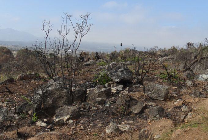 Trepando sobre cactus. El Rincón, II región