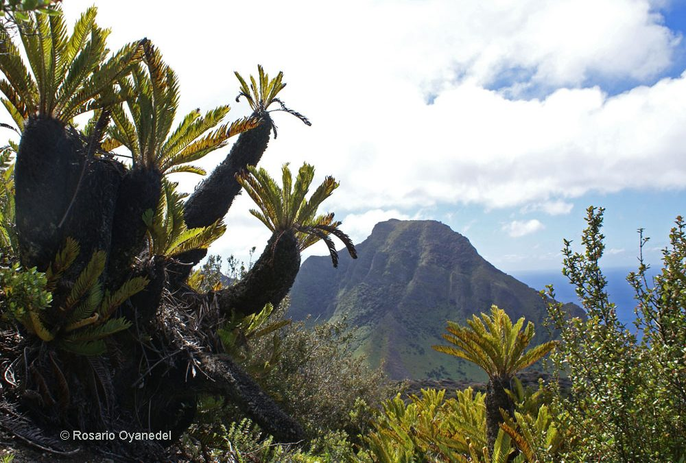 Hábito. Isla Robinson Crusoe, archipiélago Juan Fernández
