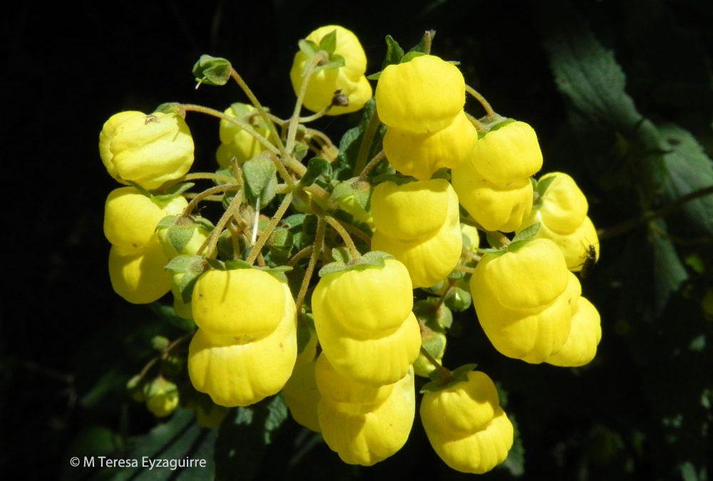 Flores, cuesta El Melón, V región