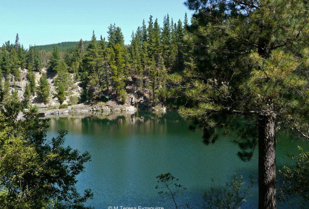 Bosque junto a la laguna del Deuco, IX región
