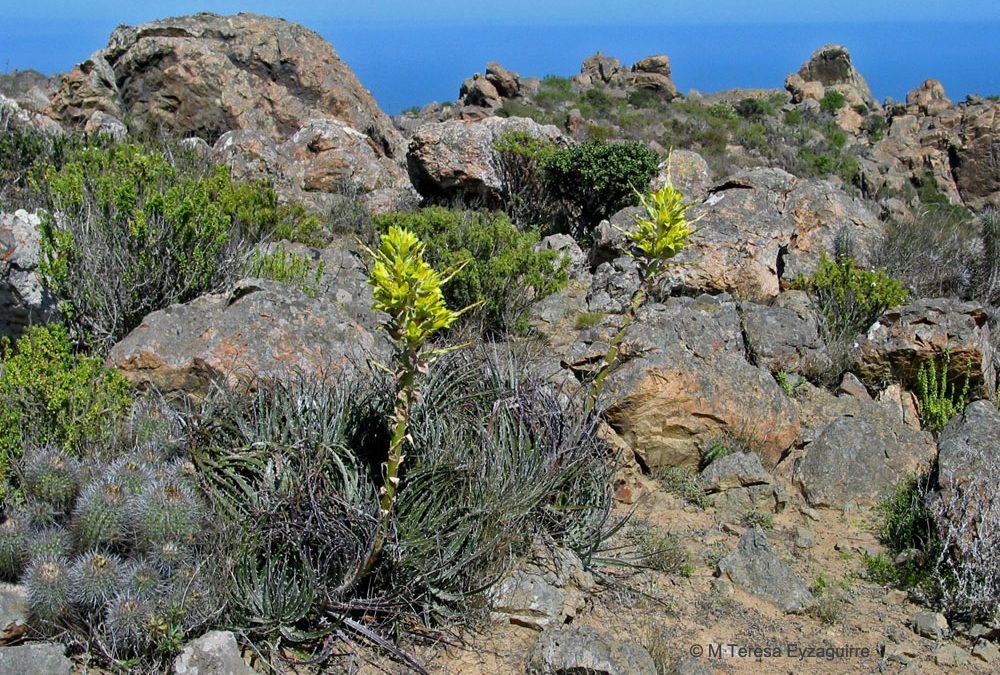 Norte de La Serena, IV región