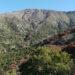 Caracterización de la flora vascular de Altos de Chicauma, Chile (33° S)